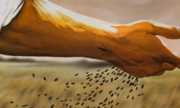 V Domingo de Cuaresma – El grano de trigo